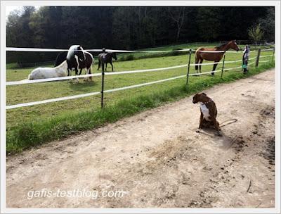 an der Pferdekoppel