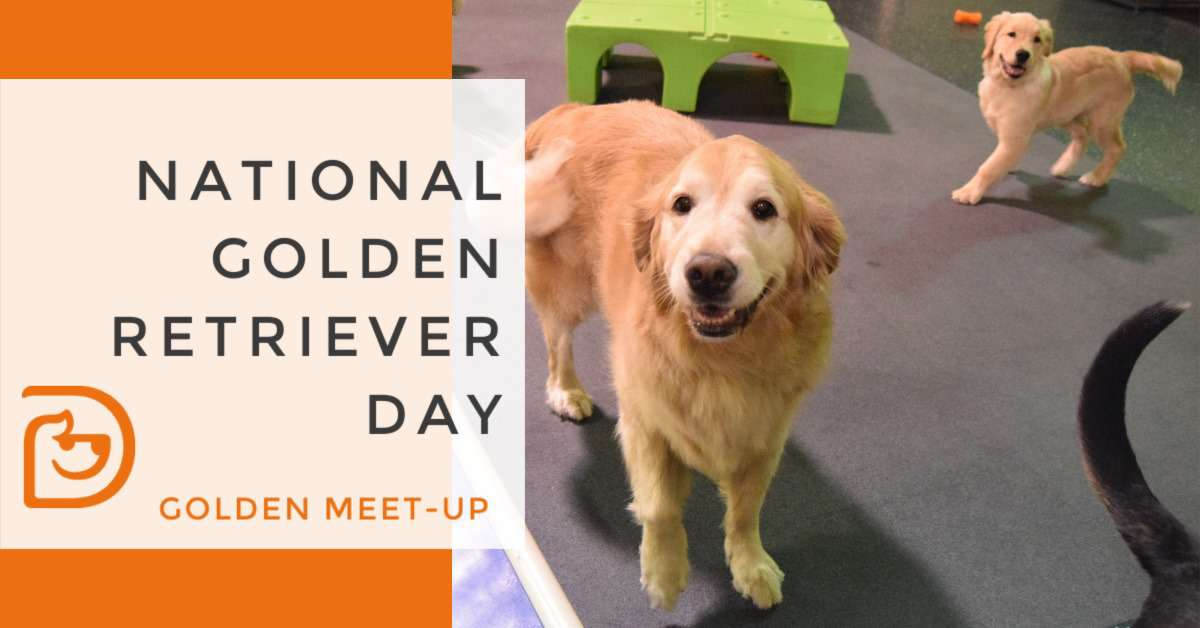 National Golden Retriever Day Wishes pics free download
