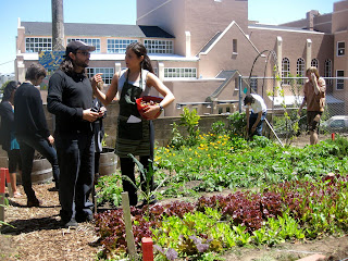 silver in sf: jobs in the USF community garden this summer