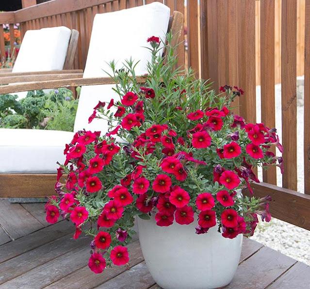 Container Garden Petchoa