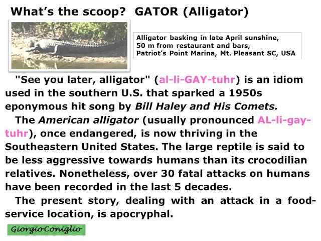 reptiles; alligator; gator; golden oldy; ecology; news; Giorgio Coniglio