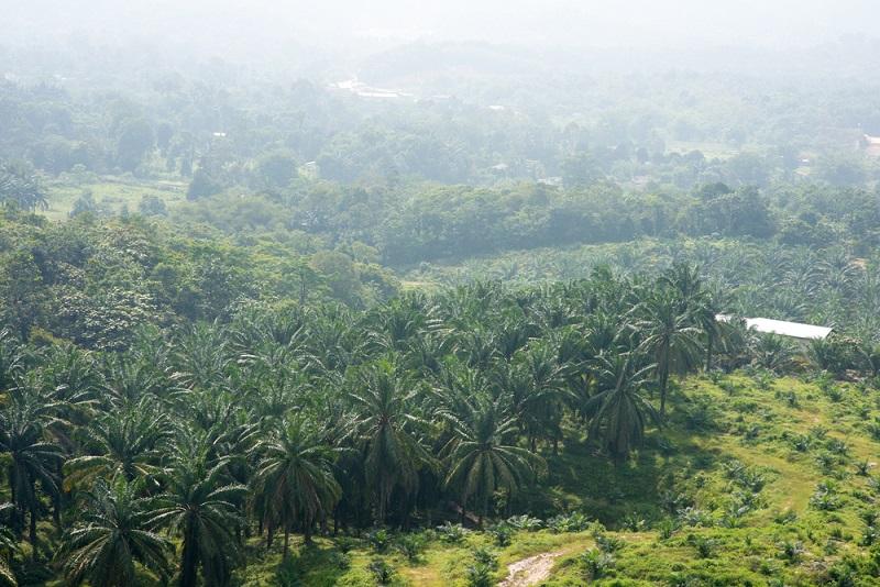 kebun sawit produk unggulan Sumatera dan Kalimantan