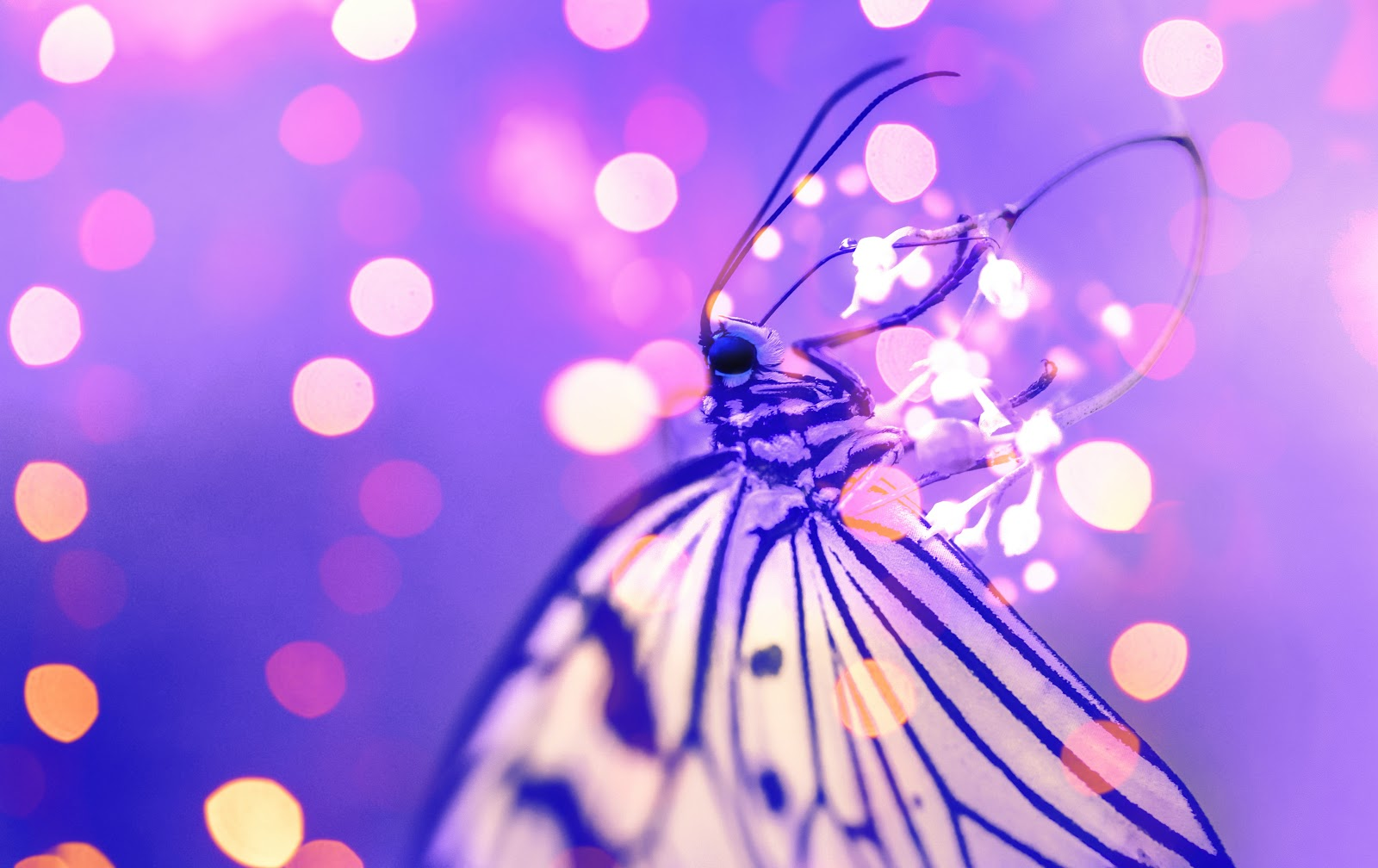 macro-photography-of-butterfly-near-lights-images