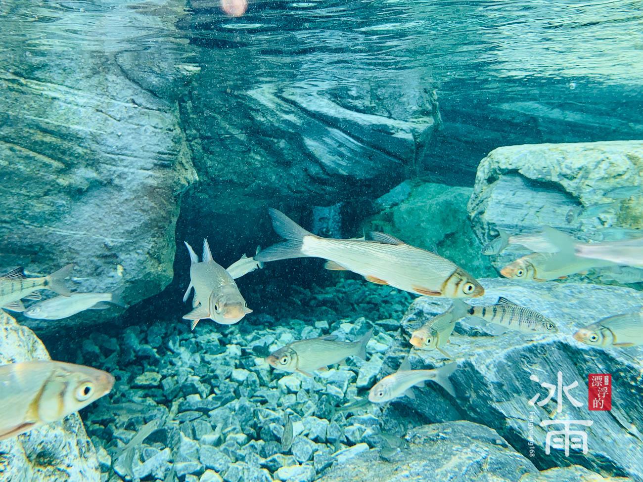 Xpark水族館|漫步叢林