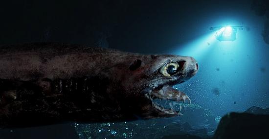 Tubarão Tenebroso - Espécie rara reaparece das profundezas