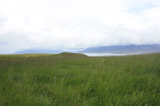 Grass on Videy Island