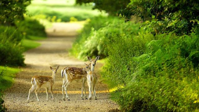 4K-HD-Wallpaper-Nature-3D