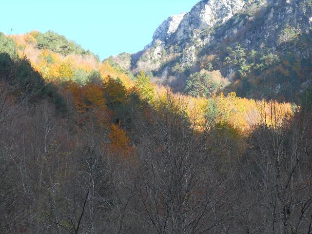 Il cambio di colore nel bosco, verso la Camosciara