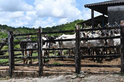 Recadastramento dos produtores e propriedades rurais vai até 15 de junho