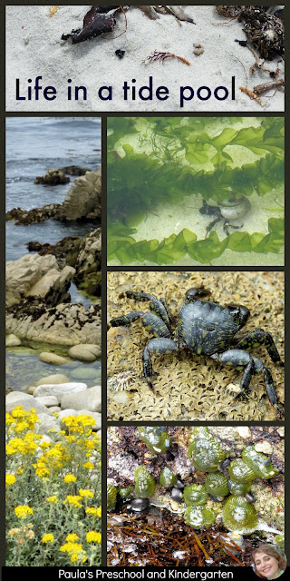 tide pools, ocean, beach, hermit crab, crab, anemone, limpets, barnacles