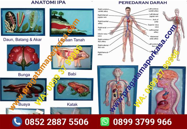 Anatomi Makhluk Hidup