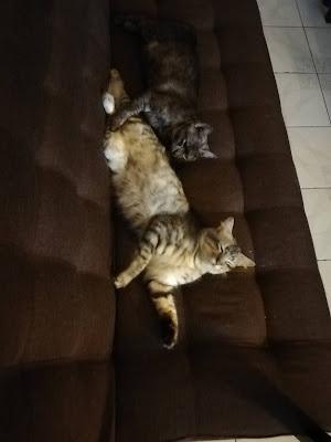 lulu dan lofa,duduk atas sofa,sofa mahal