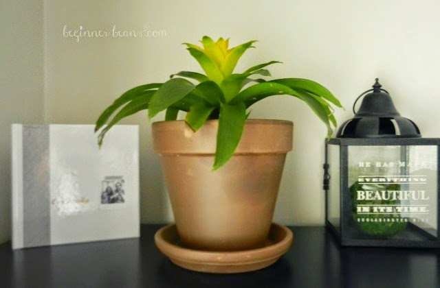 adding air-purifying plants throughout the home