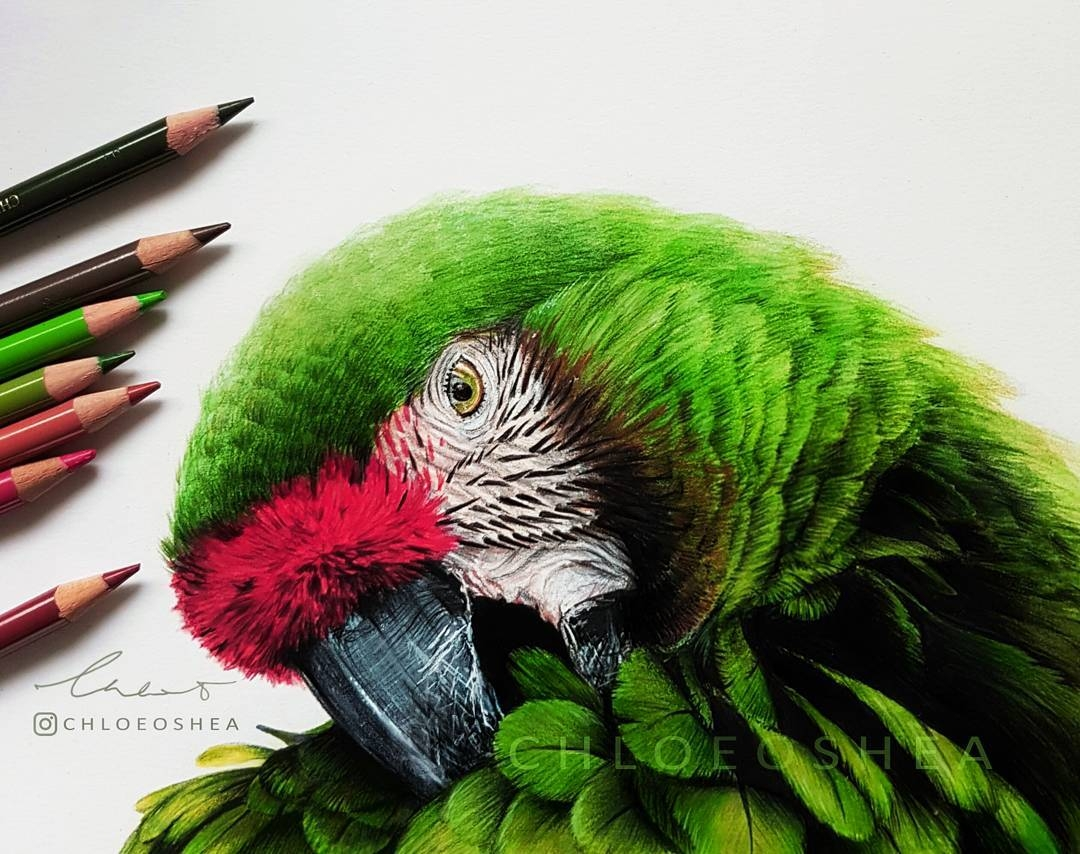 01-Macaw-Parrot-Chloe-O-Shea-Realistic-Wind-Animal-Drawings-www-designstack-co