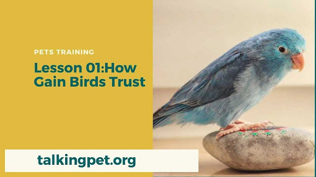 How To Gain Your Birds Trust