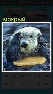 мокрый зверек выглядывает из воды 667 слов 15 уровень