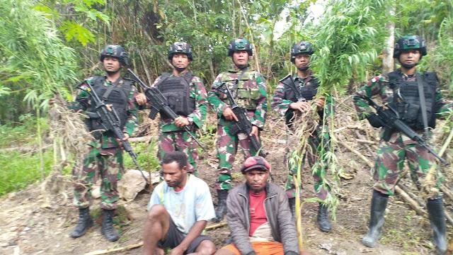 Satgas Raider 300 Ringkus 2 Warga PNG Dan Pemilik Ladang Ganja Di Keerom