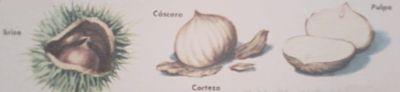 Grupo de tres castañas en su cápsula, provista de púas, otra castaña pelada y una tercera cortada a la mitad.