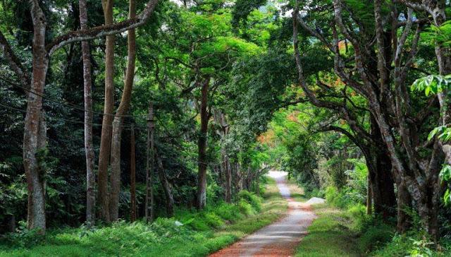 Vườn Quốc Gia Cúc Phương Ninh Bình