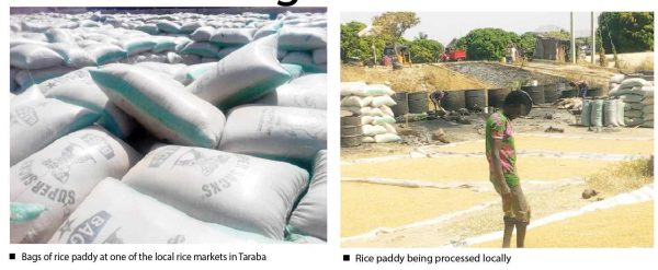 Taraba rice farmers confident of bumper harvest