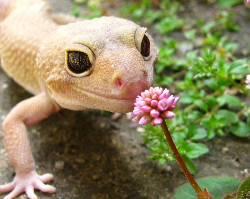 fotos bonitas de animalitos