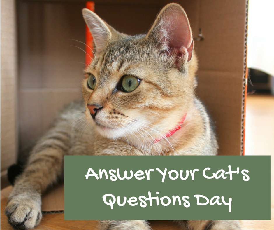 National Answer Your Cat's Questions Day Wishes Sweet Images