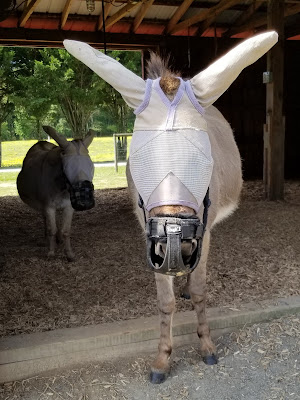 donkey with grazing muzzle and fly mask on