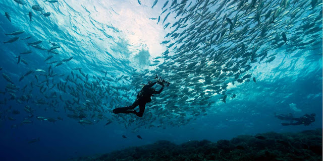 7 Unmissable Diving Spots in the Philippines
