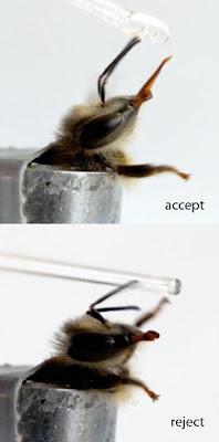 Pestisida Menyebabkan Lebah Madu Menjadi  Pestisida Menyebabkan Lebah Madu Menjadi 'Pilih-Pilih Makanan'