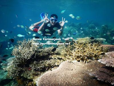 tour laut karimunjawa
