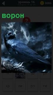 Черный ворон сидит на ветке дерева в темное время суток под еле заметной луной