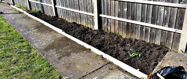 A newly dug flowerbed in my garden.