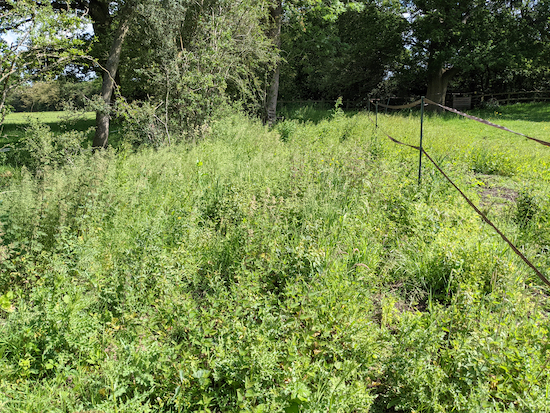 Nettles, thistles, brambles and uneven ground on the unofficial diversion