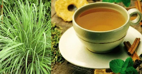 Remédio caseiro para gripe forte 8 melhores chás