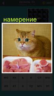 у кошки намерение утащить кусок мяса со стола 23 уровень 667 слов