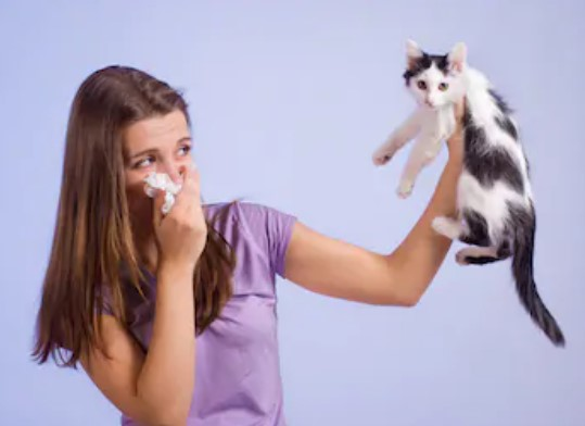 cat allergies - Causes, symptoms, and treatments