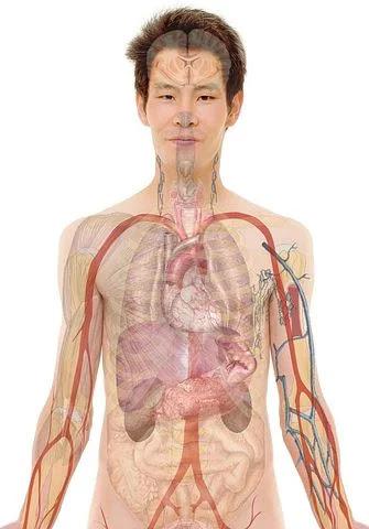 اسعار أعضاء الجسم 2020 | تركيب جسم الانسان
