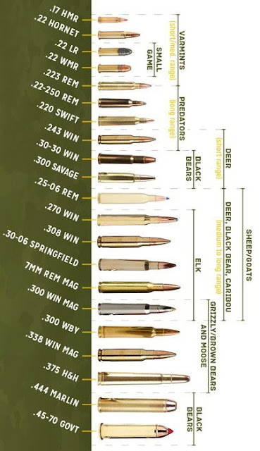 Popular Ammo Cartridges Chart With Animals Listed