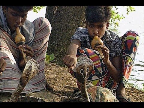 Mengenal Lebih Dalam Lagi Yang Namanya Desa Pawang Ular Di India