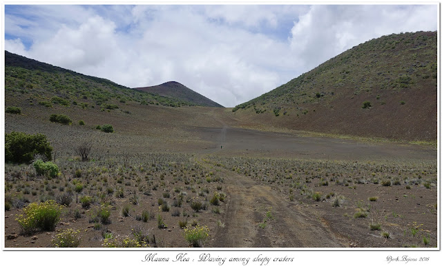 Mauna Kea: Waving among sleepy craters