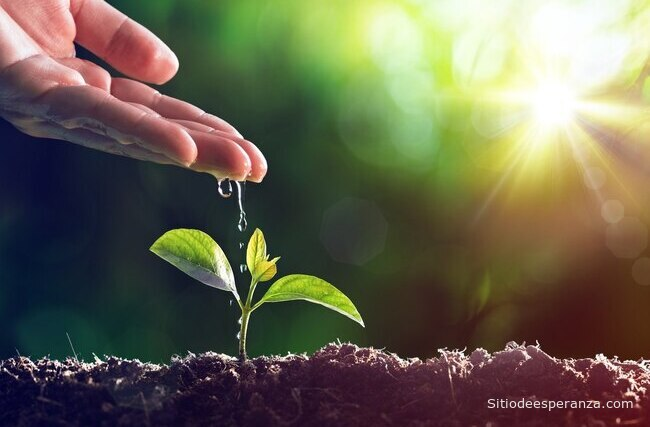 La siembra y la cosecha