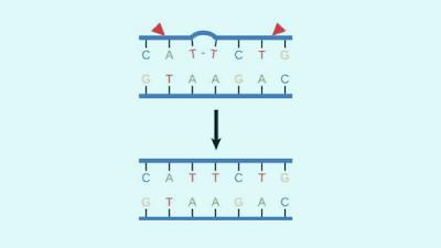 DNA-Error