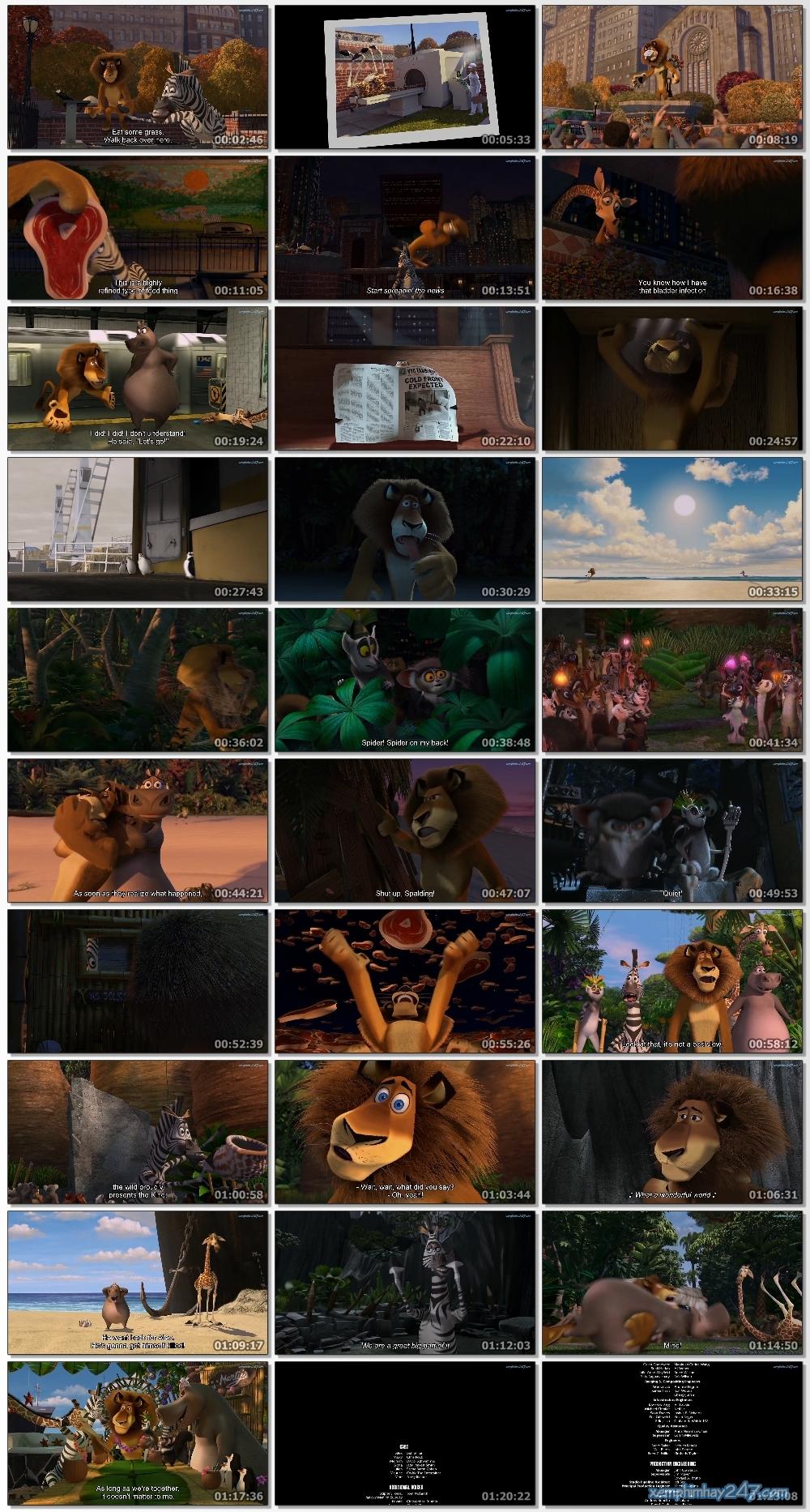 http://xemphimhay247.com - Xem phim hay 247 - Madagascar 1: Cuộc Phiêu Lưu Đến Madagascar (2005) - Madagascar (2005)