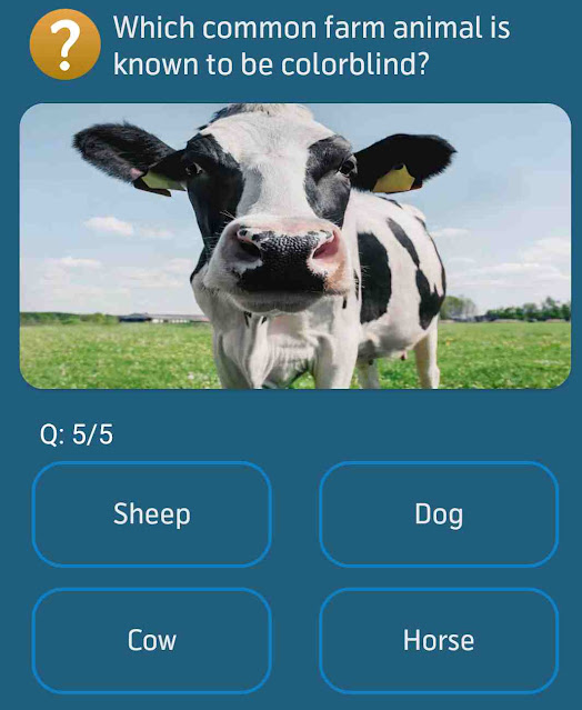 Which common farm animal is known to be colorblind?