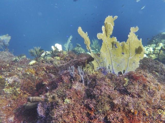 Inmersiones en Isla Catalina