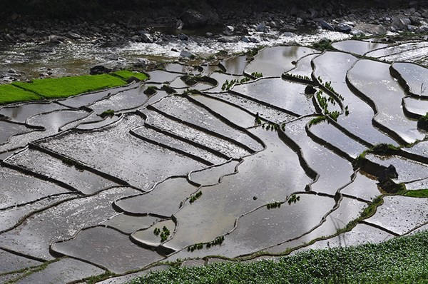 Images of terraced rice fields in Sapa