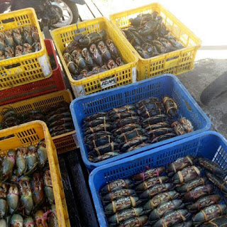 Supplier Kepiting Bakau di Jakarta 081282172354 | Jual Kepiting Bakau