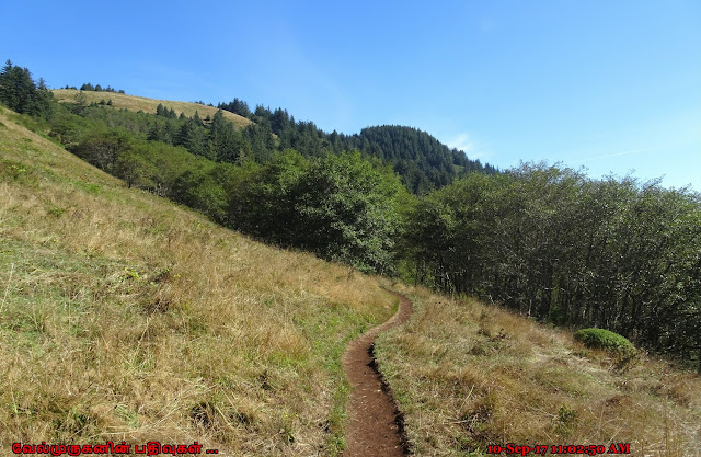 Cascade Head Trail Oregon
