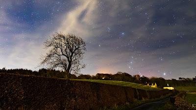 Free Nature Wallpaper Starry Night Sky, Tree, Landscape