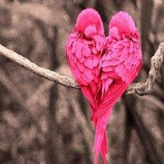 Frases romanticas de amor para Facebook y Twitter, para enamorar